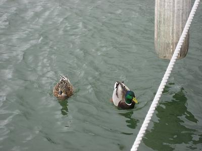 Click image for larger version  Name:duckies.jpg Views:63 Size:131.3 KB ID:10690