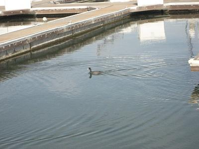 Click image for larger version  Name:coot in berth.jpg Views:57 Size:179.5 KB ID:10691