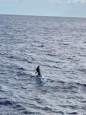 Naked Boater (safety-wise).jpeg