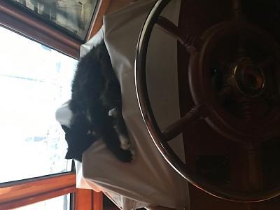 Helm Cat.jpg