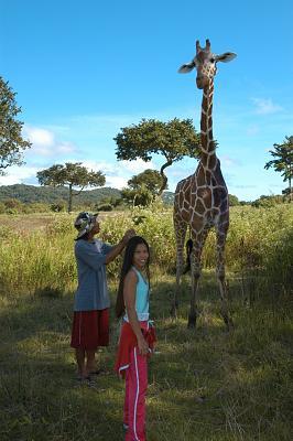 1a Giraffe DSC_0035.jpg