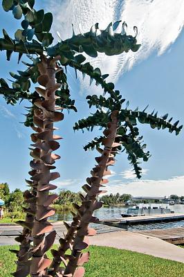 Prop Tree.jpg