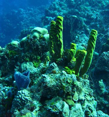 Click image for larger version  Name:coz reef.1.jpg Views:100 Size:162.8 KB ID:12730