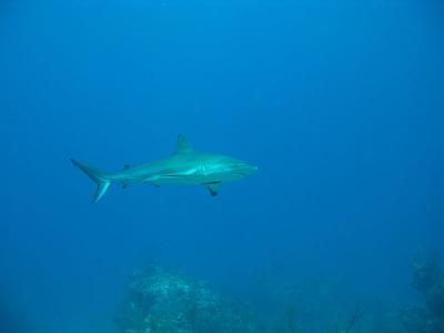 Click image for larger version  Name:B SHARK.jpg Views:107 Size:19.3 KB ID:12733