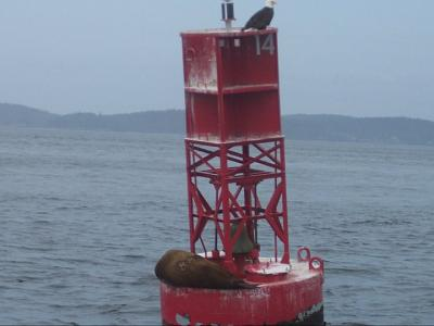 Click image for larger version  Name:Eagle_Sea Lion.jpg Views:93 Size:49.3 KB ID:13324