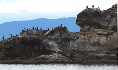 Click image for larger version  Name:Cormorants.jpg Views:132 Size:65.9 KB ID:13744