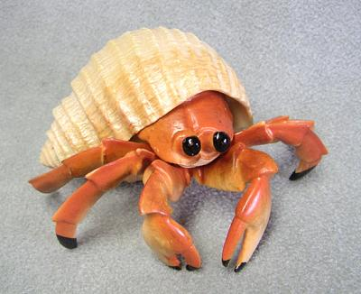 Click image for larger version  Name:Hermit crab.jpg Views:96 Size:166.8 KB ID:17323