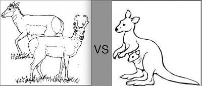 P vs Roo.jpg