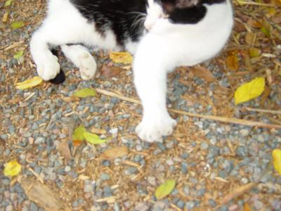 Click image for larger version  Name:Six toed Cat at Hemmingway's.JPG Views:121 Size:69.6 KB ID:20906