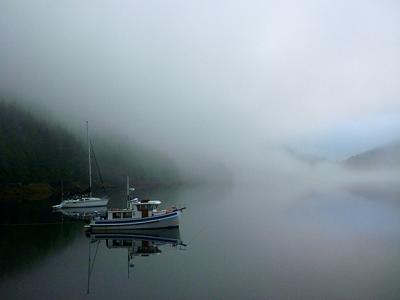 Click image for larger version  Name:Badger & Avoceta - fog.jpg Views:123 Size:47.9 KB ID:24097