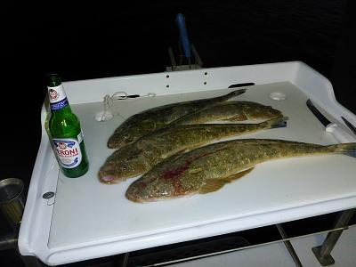 Click image for larger version  Name:2 Flathead on fly at Rooneys.jpg Views:130 Size:83.1 KB ID:24802