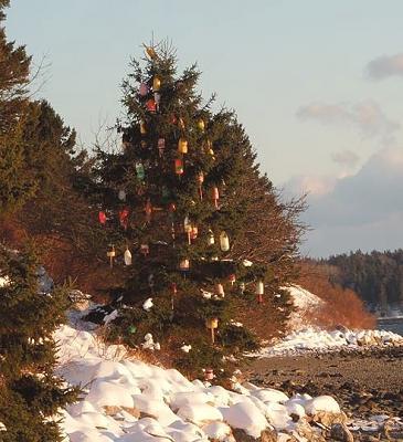 Maine Xmas Tree3.jpg