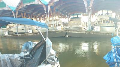 Click image for larger version  Name:dead head Jan 2014 D dock 057.jpg Views:182 Size:116.2 KB ID:26831