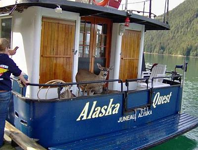 Click image for larger version  Name:deer on boat01.jpg Views:127 Size:63.9 KB ID:27077