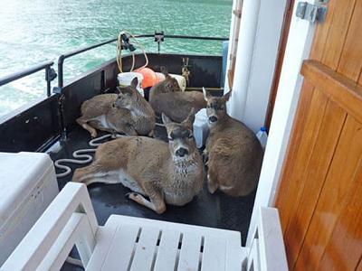 Click image for larger version  Name:Deer 03.jpg Views:126 Size:39.5 KB ID:27079