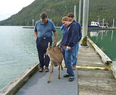 Click image for larger version  Name:Deer 04.jpg Views:132 Size:42.2 KB ID:27080