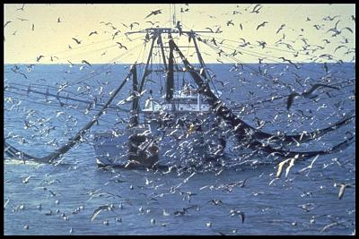 Click image for larger version  Name:Trawler 2.jpg Views:70 Size:174.1 KB ID:32596