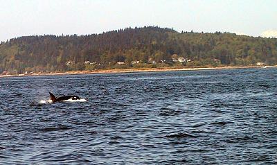 ORCA2_ScreenSize.jpg