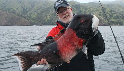 Click image for larger version  Name:Sheepshead.jpg Views:313 Size:66.3 KB ID:35293