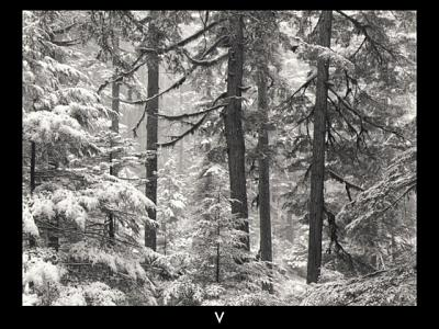 Click image for larger version  Name:Hemlocks and Snow.jpg Views:133 Size:135.2 KB ID:36087