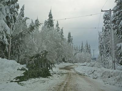 Click image for larger version  Name:Village Rd - Trees down, Feb 2015.jpg Views:240 Size:154.8 KB ID:37222