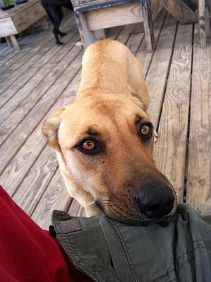Click image for larger version  Name:Pirates Cove Begging dog.jpg Views:129 Size:136.9 KB ID:38747