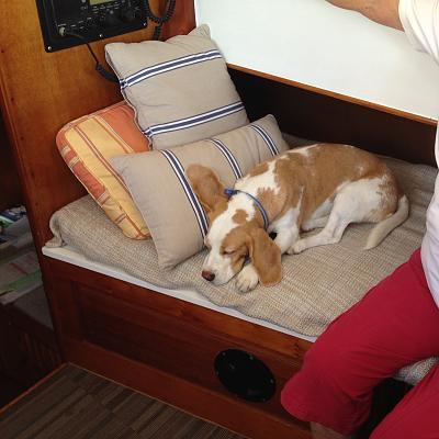 Seadog (1).jpg