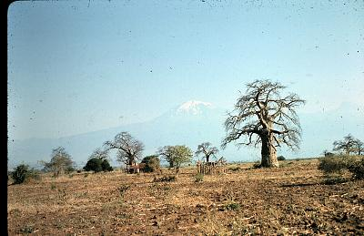 Baobab Kilimanjaro.jpg