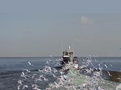 Click image for larger version  Name:trawling Bucky.jpg Views:180 Size:98.6 KB ID:42321