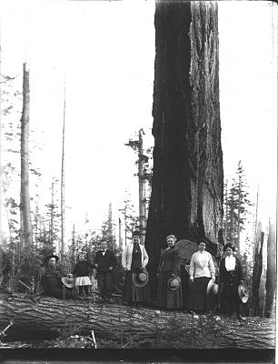 Click image for larger version  Name:Tree People.jpg Views:111 Size:122.7 KB ID:43601