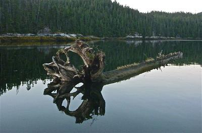 Click image for larger version  Name:Loretta Channel Driftwood.jpg Views:103 Size:101.7 KB ID:48063