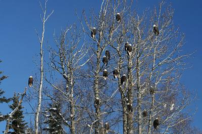 Click image for larger version  Name:Eagles-2012-Feb022.jpg Views:64 Size:138.4 KB ID:48243