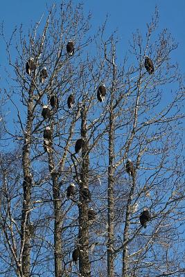 Click image for larger version  Name:Eagles-2012-Feb020.jpg Views:65 Size:181.3 KB ID:48244