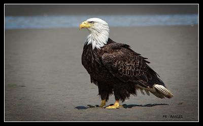 Click image for larger version  Name:Eagle (18).jpg Views:52 Size:79.5 KB ID:48245