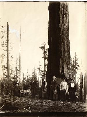 Click image for larger version  Name:Myrtle Point 1900.jpg Views:61 Size:132.2 KB ID:54506