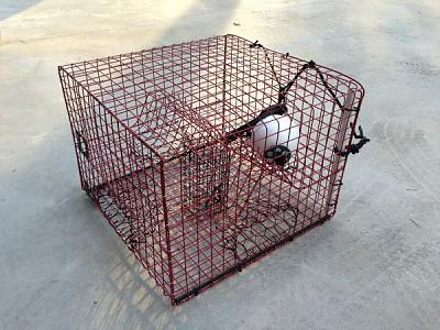 Click image for larger version  Name:crab trap.jpg Views:148 Size:70.2 KB ID:66419