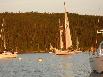 cattleboat1.jpg