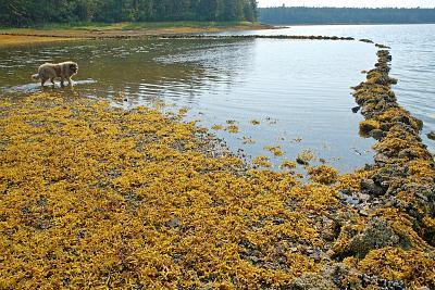 Click image for larger version  Name:Salmon weir, Kakushdish Harbour.jpg Views:101 Size:204.9 KB ID:70859