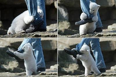 Click image for larger version  Name:polar bear.jpg Views:72 Size:81.8 KB ID:7123