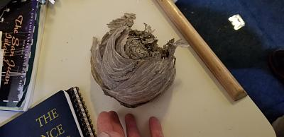 Click image for larger version  Name:bee nest.jpg Views:36 Size:62.3 KB ID:77340