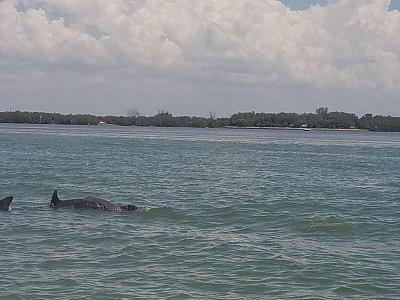 Click image for larger version  Name:dolphins.jpg Views:166 Size:130.2 KB ID:77388