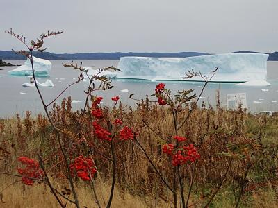 iceberg little bay island 13.jpg