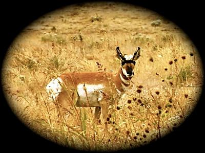 Click image for larger version  Name:young buck.jpg Views:110 Size:101.9 KB ID:9060