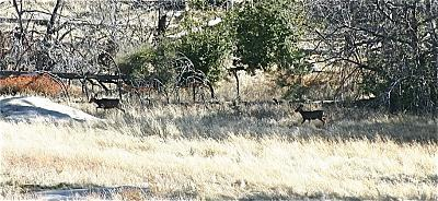 Click image for larger version  Name:black tails.jpg Views:99 Size:222.9 KB ID:9061